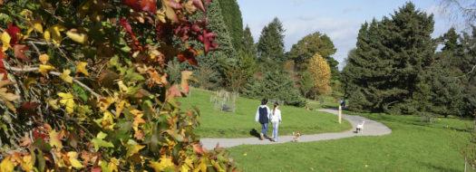 Bedgebury easy access walk