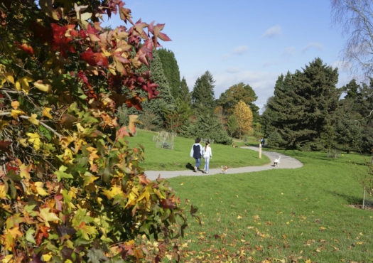 Bedgebury Pinetums easy access walking trail