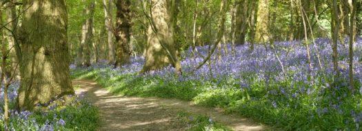 Ham Street Woods easy access trail